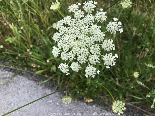 wildflower_001