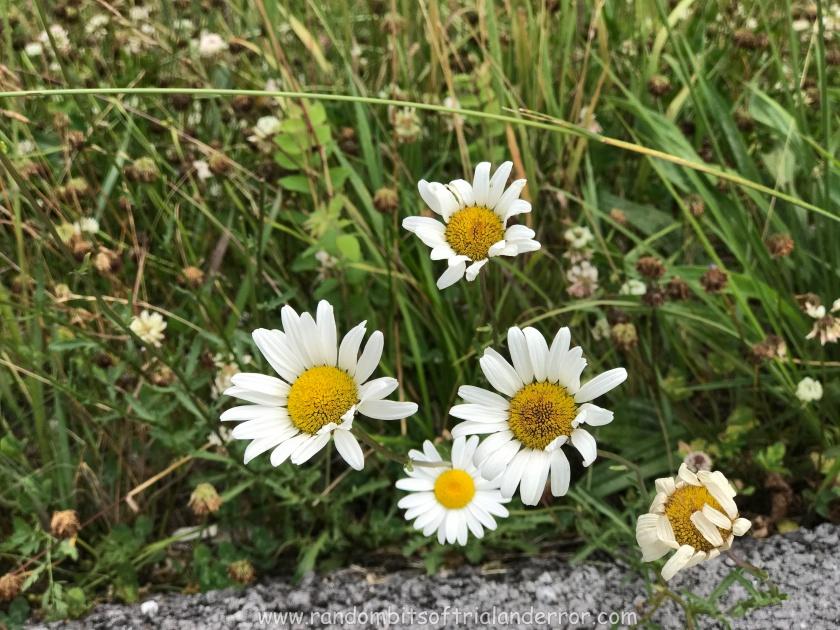 wildflower_003
